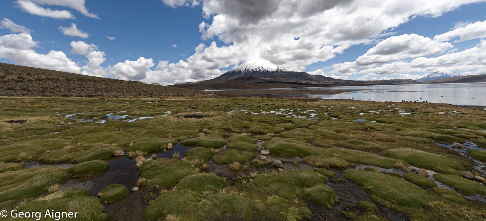 La route des Andes d'Arica au Lac Chungara
