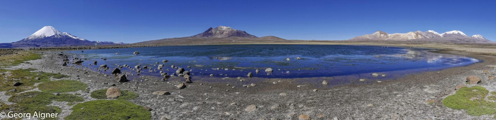 Bofedal et Altiplano: de Putre à Colchane